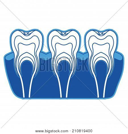 teeth with nerve and tooth root view in blue silhouette vector illustration
