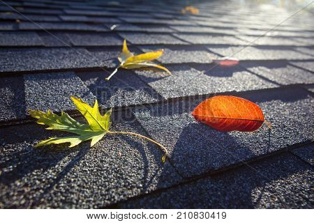 Colorful fall leaves on a roof