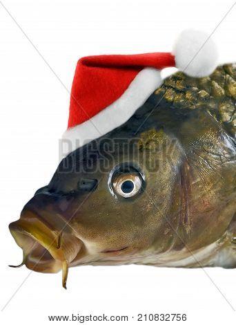Christmas Carp Fish In Santa Red Hat