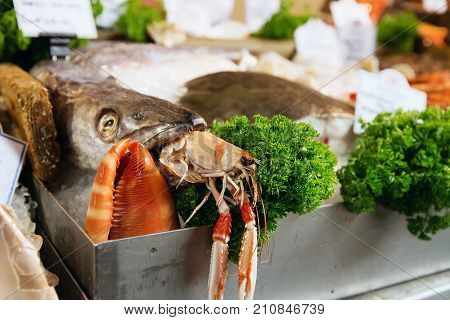 Freshly Caught Sea Fishes, Lobster And Other Seafood