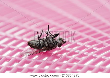 Death Fly on Swatter