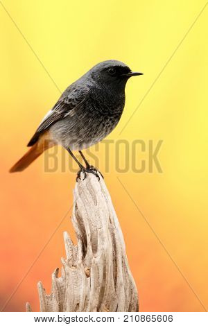 Small bird on a trunk with a yellow background