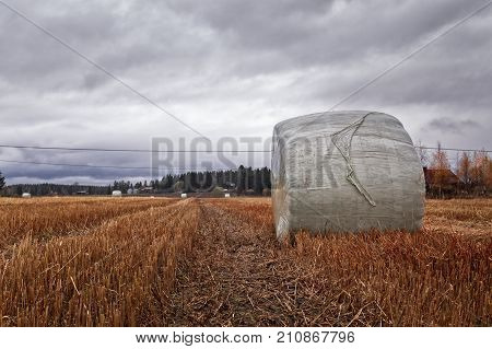 Bale Of Hay On The Autumn Fields