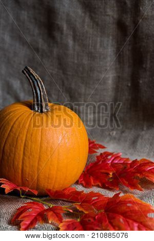 Closeup image of nice round pumpkin and red fallen leaves, autumn concept