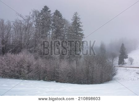 Forest In Haze With Trees In Hoarfrost