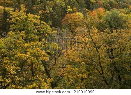 Colorful autumn forest. Natural fall forest background.
