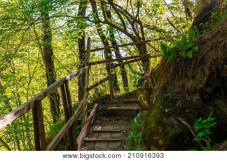 Wooden stairs and thicket in the park Berendeyevo Tsarstvo in sunny summer day  Russia