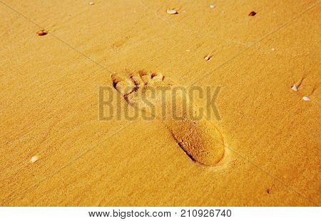 Footprints in the sand. Imprint of man's foot on the sand on the beach. top view