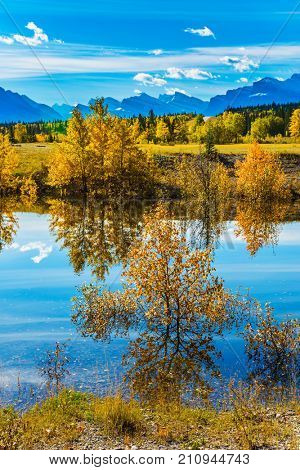 The concept of ecological and active tourism. Sunny autumn day in the Rocky Mountains of Canada. The Abraham lake reflects light cirrus clouds and trees