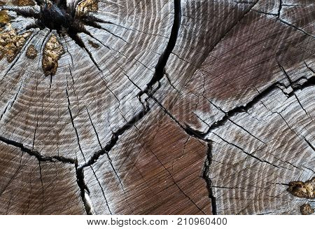 Stump with cracked wood. wood stump texture