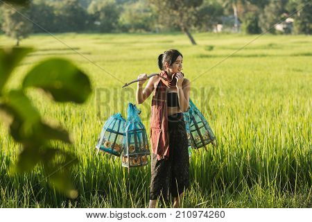 Lifestyle of rural Asian women in the field countryside thailand.Daily life of rural women in ThailandAsia people at farmland.