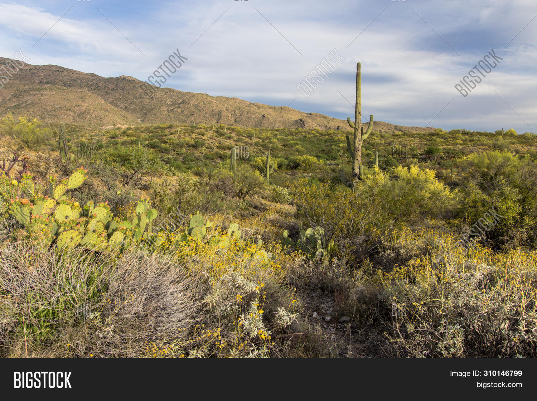 Dry Barren Desert Image Photo Free Trial Bigstock