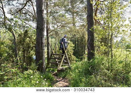 Man Walking On A Stile Into A Bright And Green Swedish Nature Reserve By Petgärde At The Island Olan