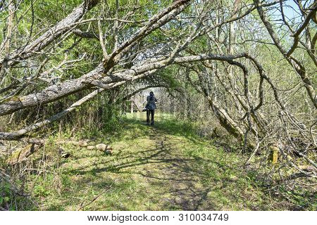 Male Photographer On A Footpath In The Swedish Nature Reserve By Petgarde At The Island Oland