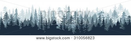 Pine Forest. Silhouette Wood Tree Background, Wild Nature Woodland Landscape. Vector Image Foggy Tal