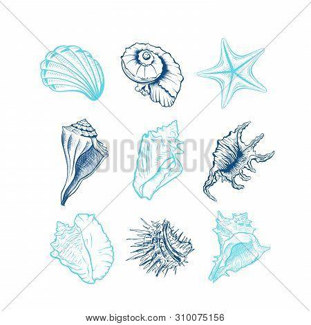 Seashells Hand Drawn Vector Illustrations Set. Underwater Animals, Starfish, Sea Urchin Blue Ink Eng
