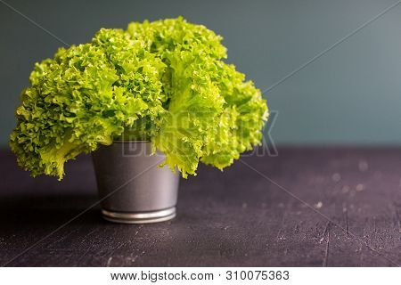 Green Lettuce In The Pot On The Black Table With Neutral Fone And Place For Message