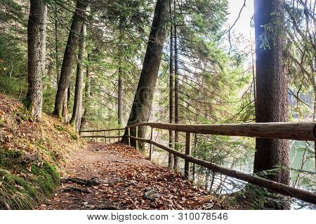 Footpath Through Autumn Forest. Wooden Fence Along The Path. Lake Synevyr Behind The Trees On The Ri