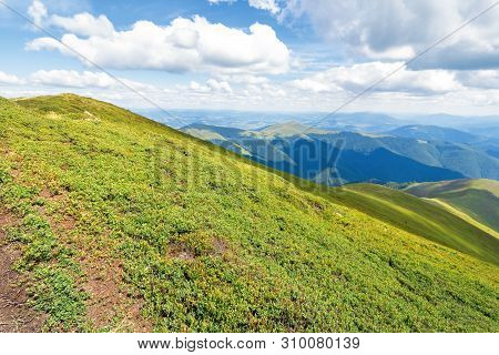 Carpathian Mountain Summer Adventure. Grassy Slopes And Hills Beneath A Blue Sky With Fluffy Clouds.
