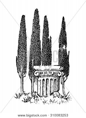 Cypress Trees In Greece. Greek Style Antique Column. Hand Drawn Engraved Vintage Sketch For Poster,