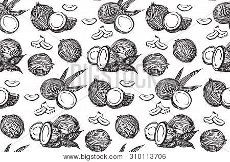 Hand Drawn Coconuts Outline Sketch Seamless Pattern. Vector Black Ink Drawing Coco Fruits. Graphic I
