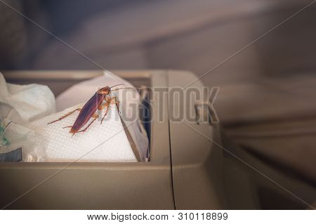 Vintage Images Of Cockroaches Inside The Car. Concept Of Eliminating Cockroaches That Are Pathogens