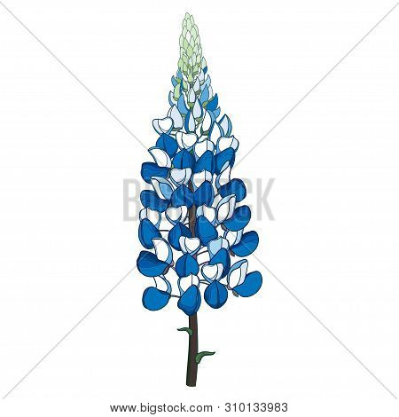 Vector Stem With Outline Lupin Or Lupine Or Texas Bluebonnet Ornate Flower Bunch With Bud In Pastel