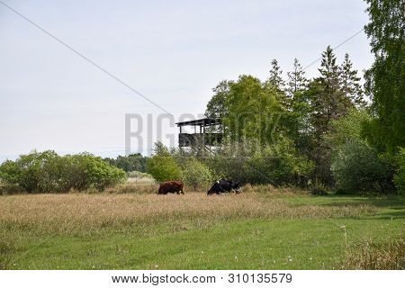 Birdwatching Tower In A Wetland By Djurstad At The Island Oland In Sweden