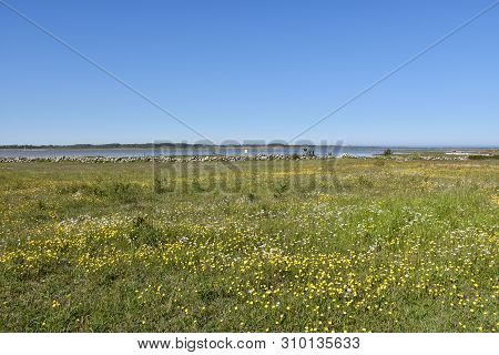 Beautiful Blossom Coastland By Spring Season At The Island Oland In Sweden