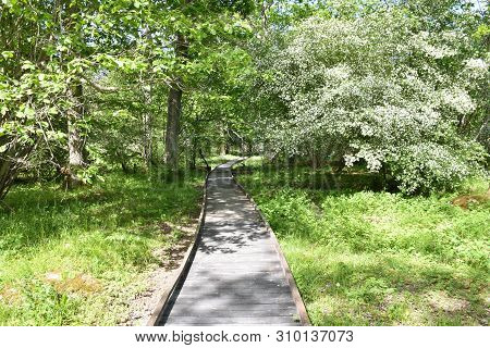 Winding Wooden Footpath In The Nature Reserve At Halltorps Hage On The Swedish Island Oland