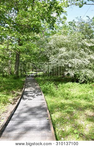 Wooden Footpath In A Bright Green Forest At The Swedish Nature Reserve Halltorps Hage On The Island