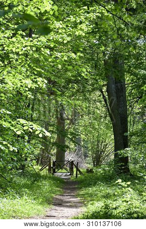 Beautiful Green Footpath In A Deciduous Forest By Spring Season In The Swedish Nature Reserve Hallto