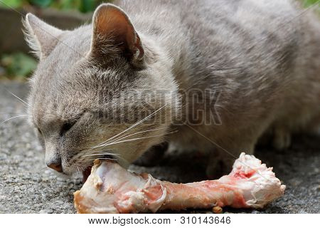 Cat Eating Raw Bone On Asphalt On The Street