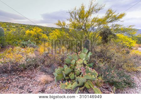 Desert Wildflower Landscape. A Prickly Pear Cactus Blooms Surrounded By A Variety Of Desert Fauna An