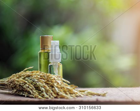 Two Glasses Bottles Of Rice Bran Oil With Seed In Sunlight Green Background, Healthy Concept