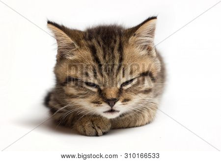 Young Cat Closed Eyes And Sleeps. Isolated