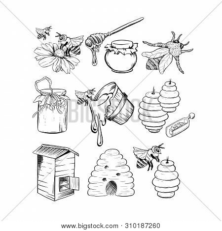 Honey Sketches Set, Bee Hive, Honey Jar, Barrel, Pot, Spoon And Flower Hand Drawn Organic Products F