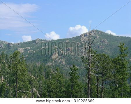 Rocky Mountain Views In The Distance With The Tops Of Tall Towering Trees Seen Along Needles Highway