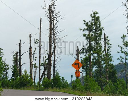 Roadside Warning Sign Of A Sharp Curve And Speed Limit Along Needles Highway At Custer State Park, S