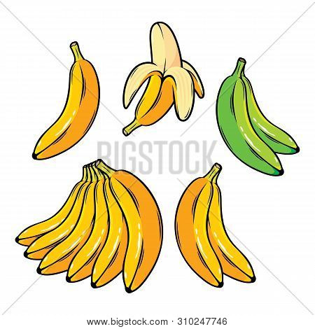 Vector Set Of Cartoon Bananas. Overripe Banana, Single Banana , Peeled Banana, Bunch Of Bananas.