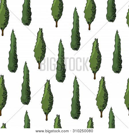 Seamless Pattern With Italian  Cypresses. Ink And Colored Elements Isolated On White Background. Vec
