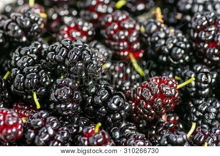 Ripe And Fresh Fruit Of Black Mulberry, Healthy Food Of Juicy Mulberry Fruit. Close-up, The Texture