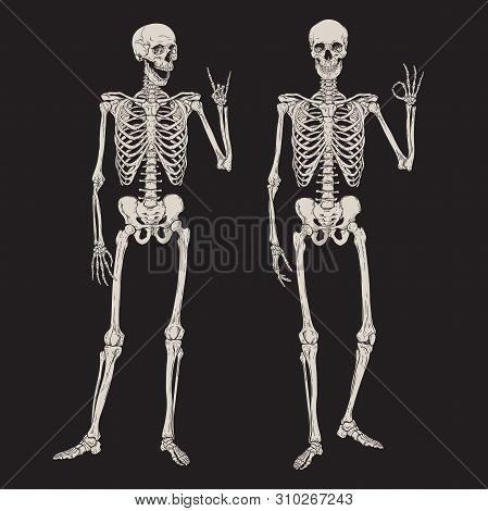 Human Skeletons Posing Isolated Over Black Background Vector Illustration. Hand Drawn Gothic Style P