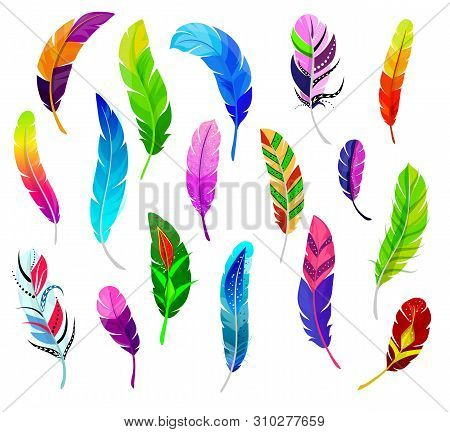 Feather Vector Fluffy Feathering Quil And Colorful Feathery Birds Plume Illustration Set Of Color Fe