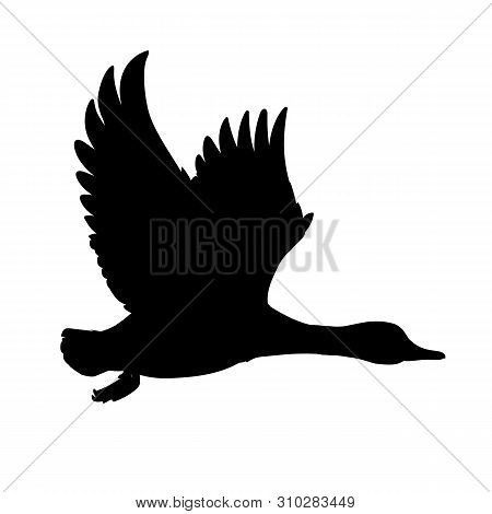 Wild Duck Flying. Drake. Vector Illustration Of Black Silhouette Of Bird Mallard Isolated On A White