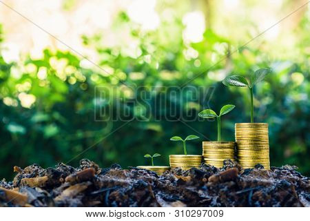 Long-term Investment Or Making Money With The Right Concepts. A Plant Growth On Stack Of Coins On Go