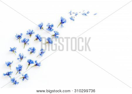 Summer Design For Blog With Blue Cornflowers On White Background Top View Copyspace