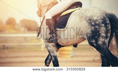 The Leg Of The Rider In The Stirrup, Riding On A Gray Horse. Equestrian Sport.