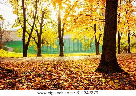 Autumn landscape - golden park trees and fallen autumn leaves on the ground in city park in sunny autumn day. Colorful autumn scene, sunny autumn park alley