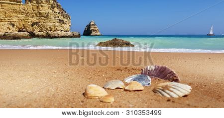 Sea Shells On The Beach In Lagos, Portugal